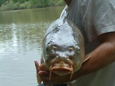 CARP FISHING HOLIDAYS IN FRANCE (COARSE FISHING ALSO AVAILABLE)