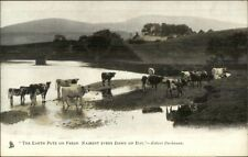 TUCK Animal Studies Cows Pasture Water c1910 Postcard