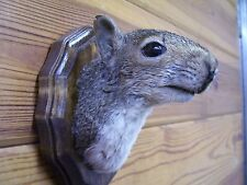 Original  squirrel head mount Great Christmas or  Gag gift