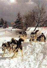 BT9261 husky club francais des chien nordiques france dog  animal animaux