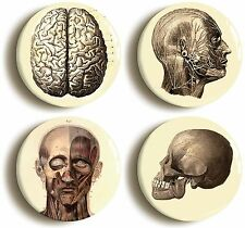 4 x ANATOMY BADGES BUTTONS PINS (1inch/25mm diameter) MEDICAL DOCTOR NURSE