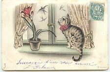 Chat regardant des hirondelles à travers une fenêtre