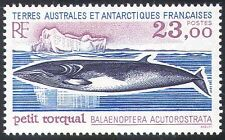 FSAT/TAAF 1995 Minke Whale/marine/Animals/Nature/Wildlife/Conservation 1v n22867