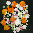 Drilled Sea Shells Wind Chimes DIY Supplies/Handmade Craft Art/Outdoor Beach