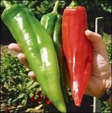 25 NEW MEXICO BIG JIM PEPPER SEEDS HEIRLOOM 2016 (non-gmo heirloom seed)