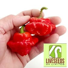 Liveseeds - Red Squash Chilli Pepper Seeds x 10