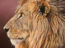 """""""Titan II"""" Guy Combes Fine Art  Edition Giclee Canvas - African Lion"""