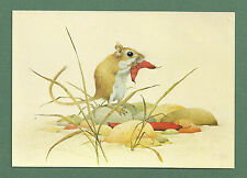 C.1970'S MEDICI POSTCARD - GERBIL EATING A JUDAS TREE  - KENNETH LILLY P.C. 1660