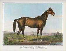 """1978 Vintage """"LEXINGTON"""" HORSE RACING CHAMPION CURRIER & IVES COLOR Lithograph"""