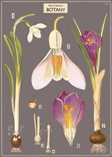 Botany - flowers  Poster Cavallini & Co 20 x 28 Wrap