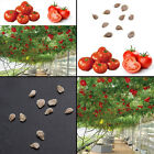 10pcs Rare Home Garden Seeds Sweet Huge Tree Tomato Seeds Fruit Vegetable Seeds