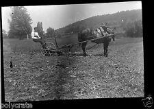 Portrait homme sur charrue avec cheval -  ancien négatif photo  an. 1950