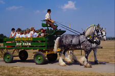 512087 Shire Horse Ride Britain A4 Photo Print
