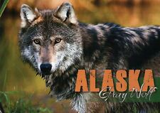 Alaska Gray Wolf, Canus Lupus, AK Timber Wolf, North America --- Animal Postcard