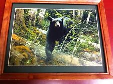 Black Bear  hunting picture ready to hang on the wall great picture
