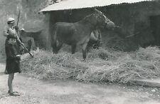 GUILLESTRE c. 1935 - Enfant Battage du Blé piétiné par un Âne Hérault - DIV 6443