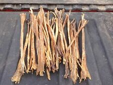 Moose Front Leg sinew arts pow wow mountain man native craft art 12-16 Ins