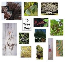 10 Trees for $20 - Fast Growing Hardwoods, Pecan, Hazelnut, Dogwood, Paw Paw