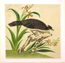 Chino Ricepaper Dibujos un ave exótica sobre una roca con Flores c1840