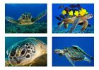 4 Sea Turtle / Sea Turtles  5 x 7 GLOSSY * 4 Photo Picture LOT