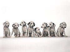Encadrée imprimer-rangée de dalmatiens chiots noir & blanc (photo poster chiot art
