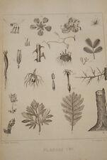GRANDVILLE-FLEURS ANIMEES-GRAVURE  BOTANIQUE PLANCHE 1 1852 PRINT