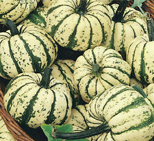 A 2g (approx.25) exotic squash seeds SWEET DUMPLING rare One of sweetest squash