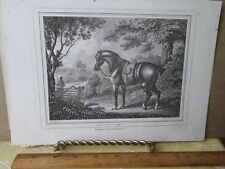 Vintage Print,SHOOTING,Poney Engraved,Edward Orne,1799