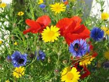 Wildflower Seed Mix ,6 ounces , Great for Colorful Borders and  Gardens.