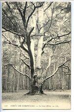 CP 60 OISE - Forêt de Compiegne - Le Gros Hêtre