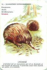 Échidné Echidna Spiny Anteater PLAYING CARD CARTE A JOUER OLD ANCIEN
