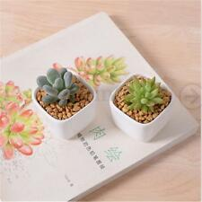 Mini White Ceramic Succulent Planter Flower Porcelain Pot Plant Box Garden Decor