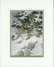 Cougar by Larry Fanning Wildlife Mountain Lion Double Matted Fits 8x10 Frame