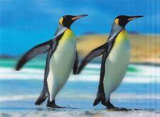 3 -D - Ansichtskarte: Königspinguine - King Penguin - Aptenodytes Patagonicus