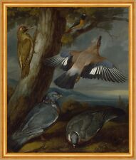 Jay, Green Woodpecker, Pigeons, and Redstart Francis Barlow Vögel B A1 01814