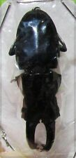 Uncommon Peruvian Stag Beetle Cantharolethrus steinheili Male FAST SHIP FROM USA