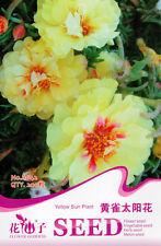 1 Pack 200 Yellow Heronsbill Seeds Sun Plant Taiyanfa Portulaca Grandiflora A042