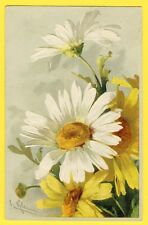 cpa Belle MARGUERITES Blanches et Jaunes Yellow and White DAISIES Signée C.KLEIN