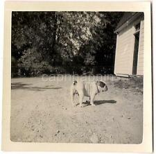 Country English Bull Dog Pug & His Shadow On A Sunny Day Vintage 1940s Photo