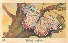 OLD CARD IMAGE : Delias eucharis Common Jezebel Butterfly Papillon