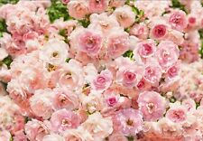 Giant wall mural for Bedroom & living room Pink Roses Flowers PHOTO WALLPAPER