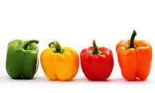 Bell Sweet Peppers Red Green Yellow Seeds 'Summer Salad Improved Mix' QUALITY