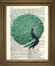 EXOTIC BLUE GREEN PEACOCK BIRD: Vintage Turquoise Victorian Dictionary Art Print