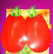 20 Red Pyriform Tomato Seeds Lycopersicon Esculentum Organic Vegetables C103
