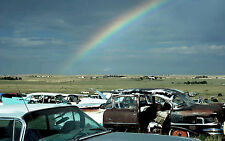 1960s Cars salvage yard 11 x 17 Photograph