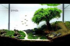 Xmas Moss-plant for java live koi fish goldfish gold a2