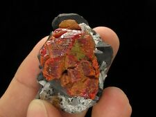Realgar with Galena & Quartz, Paloma Mine! PERU