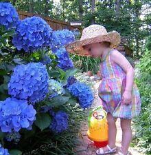 Gorgeous 10 Blue Hydrangea Flower Seeds Easy to Plant Ideal Garden Present