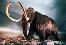 Framed Print - Woolly Mammoth Walking the Rocky Tundra (Picture Poster Art)