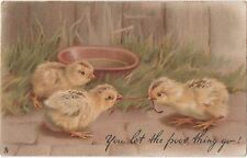 POSTCARD  ANIMALS  CHICKS  You let the poor thing go !   Tuck